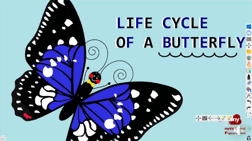 OC butterfly lifecycle.png