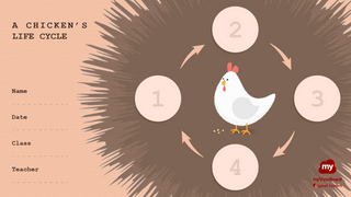 Thumbnail life cycle of a chicken15-FHD-logo.png