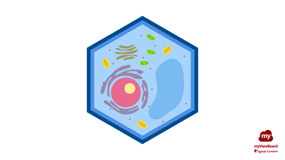 Plant cell-FHD-logo.png