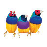 3Finches.png